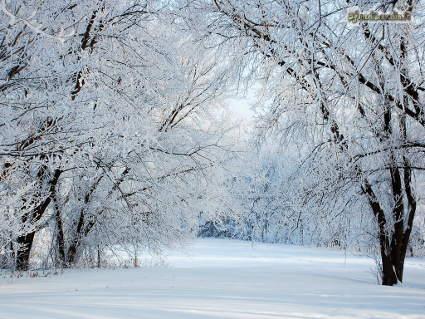 neve, freddo, ghiaccio, ciaspole, gita, passeggio