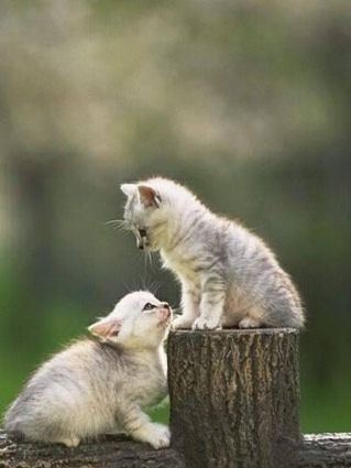 gatti, gattini, gioco, giocare, crescere, coppia, ramo, tronco, reciso, tagliato, tagliare, recidere, campo, libertà, gaiezza