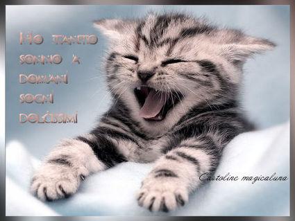 gatti, sbadiglio, denti, sonno, riposo, fatica, letto