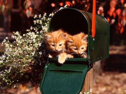 gatti, posta, buca, lettere, postino, dolcezza, simpatia, buffe