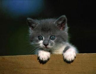 gatto, controllo, curioso, divertente, cucciolo, micino, micetto