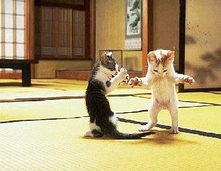 gatti, lotta, matrix, morpheus, neo