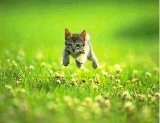 gatto, cucciolo, micino, corsa, prato, correre, libertà