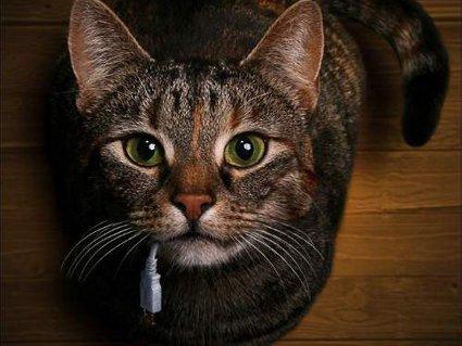 gatto, mouse, mangiare, felino, fotomontaggio, divertenti