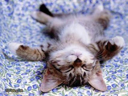 cartolina gattino riposo, letto, posizione sonno, relax, cartoline gatti