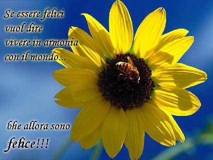 felice, gioia, mondo, sereno, ape, girasole, nascita, risveglio, sole, seguire, raggio, luce, vita, nettare, polline, impollinare, naturale
