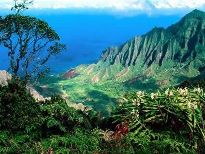 alto, visuale, verde, balconata, naturale, vedere, splendore, magnificenza, elementi, naturali