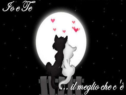 amore, san valentino, affetto, mici, notte, cuore, rosso, auguri