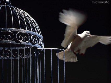 volare, ali, libero, prigione, gabbia, cibo, porta, sogni, realizzare