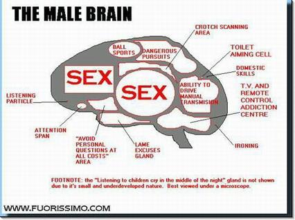 sesso, cervello, maschile, divertente, spiritosa