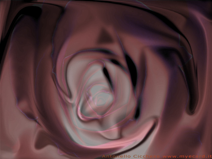 rosa, fluida, rossa, fiore, amore, drappo, seta, velo, velato, svelare, fluidità