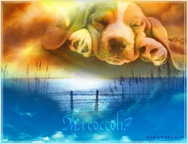 cane, cagnolino, mare, riva, arena, spiaggia, onde, orecchie, cucciolo, coccole, carezze, solitudine, tenero, pelo, mani, passare, vicini, vicino