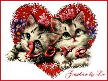 cartoline amore, cuore, gatti, sentimento, affetto, affinita, carisma, tesoro. love card