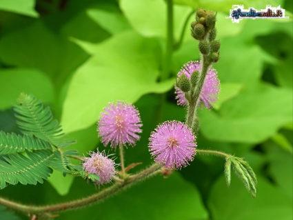 stimoli, rosa, delicata, foglie, chidersi, tocco