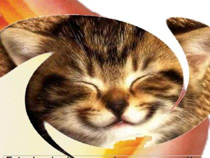 sorriso, gatto, muso, divertire, serenita, pace, risate