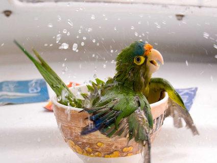 bagno, calore, pulizia, acqua