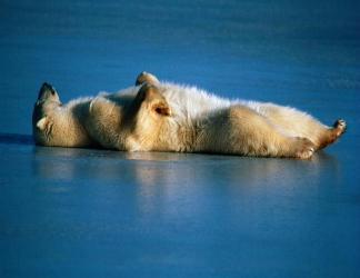stanchezza, riposo, supino, schiena, zampe, piegate, freddo, pelo, bianco