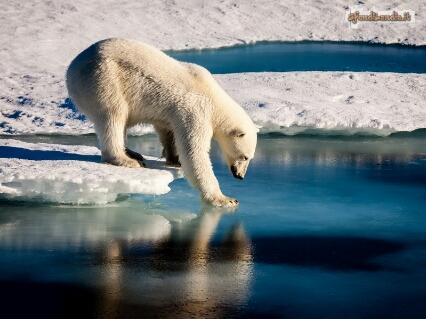 Caldo, ghiaccio, sciogliere, caduta, testare