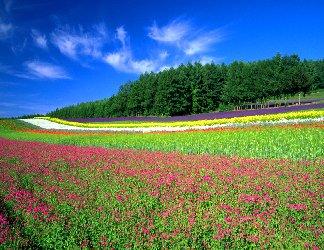 arcobaleno, fiori, sterminato, verde, foglie, petali, profumi, tagliare, trattori, vendere