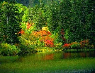 fiori, si, specchiano, nell'acqua, cascata, vari, multi, petali, colorati, colorazione, raggiante
