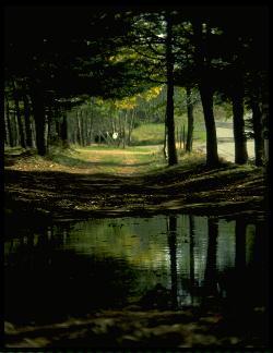 strada, immagine, sentiero, di vita, percorso, nel buio, selciato, pozza, fango, difficoltà
