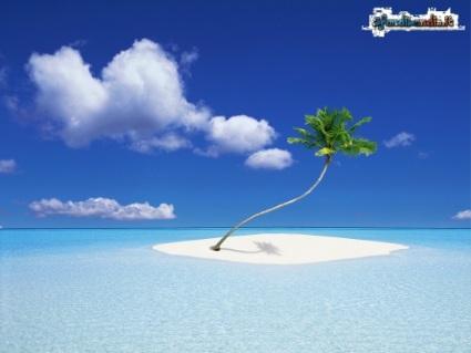 palma, isola, tropici, caldo, mare, cristallo, sole, fresco, cocco