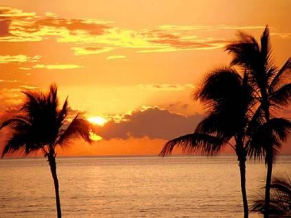 clima, tropicale, spiagge, meteo, previsioni, bagno, bagni, tuffi, cocco, arbusti, tronco, foglie, punta
