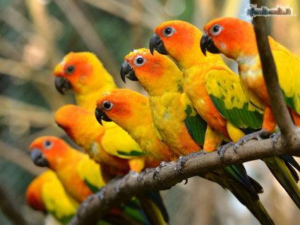uccelli, colore, curiosi, attrazione