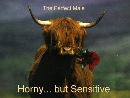 uomo, perfetto, mucca, toro, sensibile, fiore, eccitato, maschio, bello