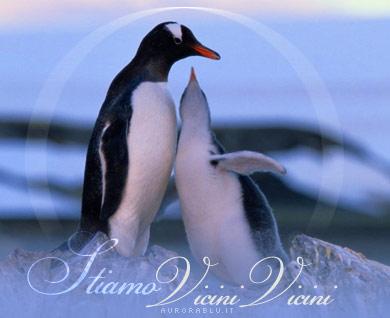 pinguini, pinguino, frase, celebre, paperissima, vocine, vocina, voce, vociferare, parlare, stretti, stringersi, stringere, affetto