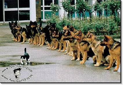 sentirsi, minacciato, osservatopreda, cacciatori, tranquillità, apparente, pasto, pappa, cani, lupo, pastori, tedeschi, pastore, facile, boccone