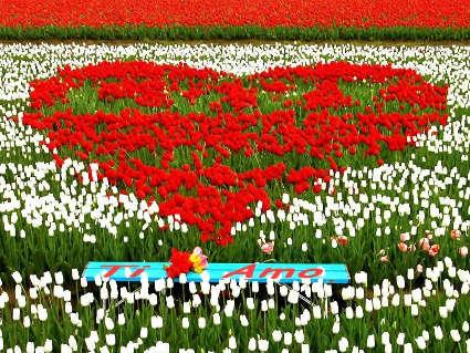 amore, fiori, tulipani, disegno, astratto