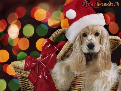 cartoline regali di natale, donami un cucciolo, cane, cesto natalizio, cartolina di natale