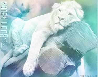 riposo, riposare, tronco, roccia, leone, re foresta, tranquillita, piacere, piacevole, staccare, mentale, vacanza, fare nulla, ozio