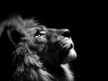 leone, fierezza, forza, riflessione, aldila, visione