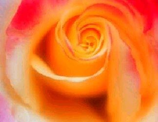 effetto, sfumato, rosa del papa, tipo, rose, colore, tenue, delicata, pura, candida, sfocato