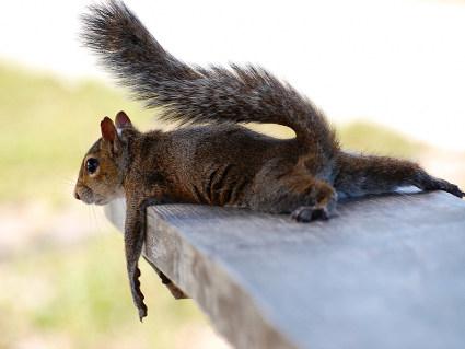 scoiattolo, salita, scendi, stress, stanchezza, pezzi, morale