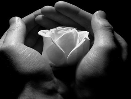 cartoline d'amore, un fiore a te, ti dedico un fiore, amore e rose, regalo