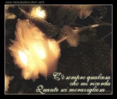 cartolina amore, rimembrare, ritornare, rosa strana, notte, radiosa, mi ricordi che sei meravigliosa