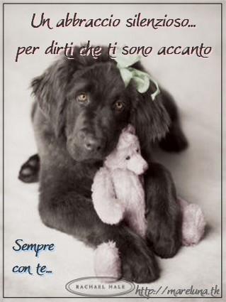 amico, cane, gatto, sincero, affetto solitario, condividere