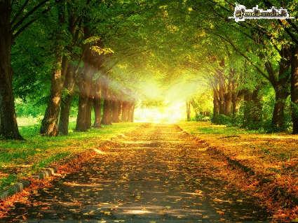 sole, calore, caldo, strada, alberi, foglie, cadere, secche