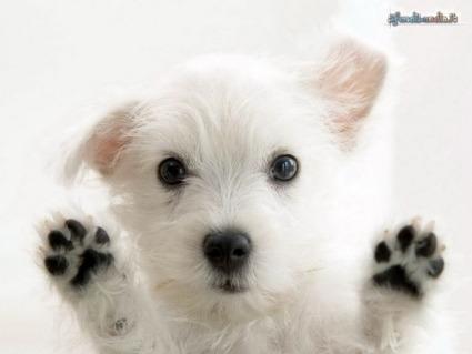 occhioni, cucciolo, verificare, curiosare