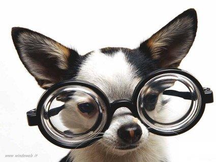 cane, occhiali, montatura, lenti, vista, controllare, sguardo
