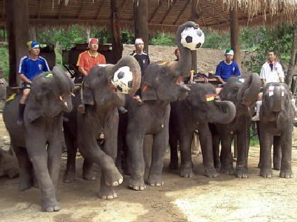 elefanti, palloni, seguito, africa, ghana, togo, continente nero, flag, bandiere, partecipare, orgoglio, televisione, dirette, diretta, mms, sms, um