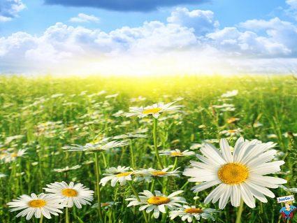 liberta, amore, relax, divino, riscoperta, natura