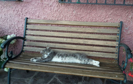 gatto, panchina, riposo, caldo, stress, cuscino, siesta