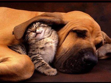 felino, canino, lotta, amore, fame, cibo, predatore, orecchio, sonno, strizzare