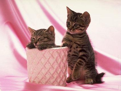 gatti, vaso, nascondere, felino, coppia, giochi, crescita