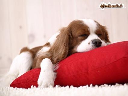 riposo, relax, dolce, cuscino, rosso, macchie, stanchezza