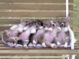 cani, cuccioli, sonno, riposino, rosa, panchina, divertenti, buffa
